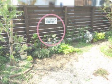 庭の一角移植予定地