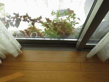 西日を遮光ネットで遮った窓辺