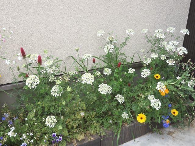 2017年5月の駐車場花壇