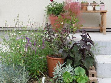 植栽の中にスモークツリーの植木鉢を置いている画像
