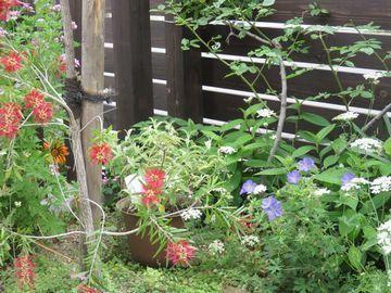 植栽の中に斑入りブッドレアの植木鉢を置いている画像