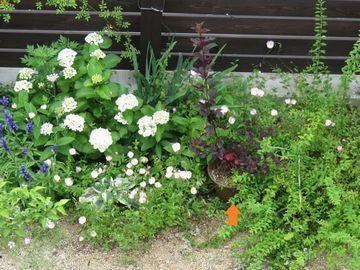 植栽の中にアメリカテマリシモツケ ディアボロの植木鉢を置いている画像