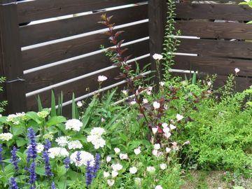 庭の片隅の写真