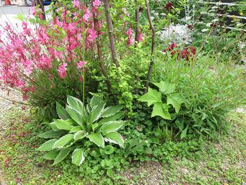 エゴノキの足元の植栽