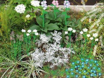 来春の花をイメージしたお絵描き写真