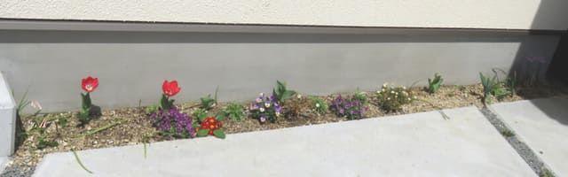 チューリップが咲いた細長い花壇