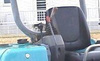 ショベルカーの座席のねこ