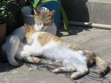 酒屋さんの猫たち