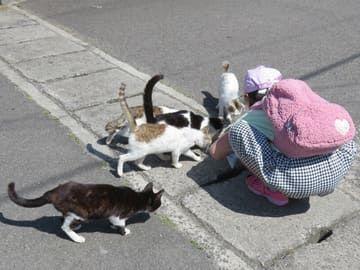 本浦港の猫たち