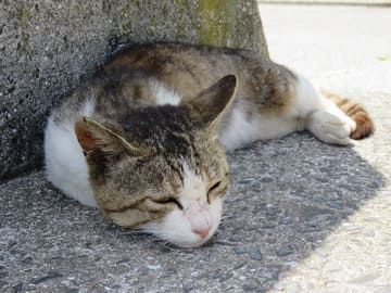 昼寝をしてる猫
