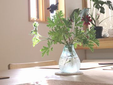 花瓶に生けたゼラニウムとチョコレートコスモス