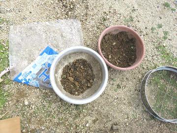 植木鉢に入れた掘った土