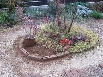改造中の植栽の画像
