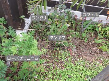 庭の一角に植えている植物の説明