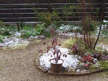 うっすら雪が積もった庭