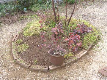 エゴノキの足元の植栽スペースを広げた様子