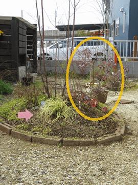 エゴノキの足元の植栽説明
