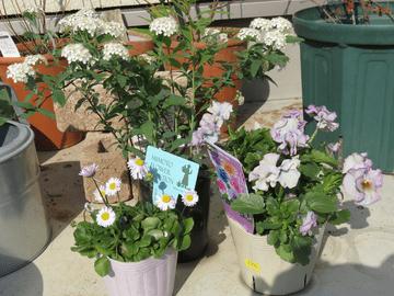 春の寄せ植えに使う草花