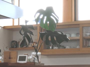 モンステラの葉っぱを飾ったキッチンカウンター