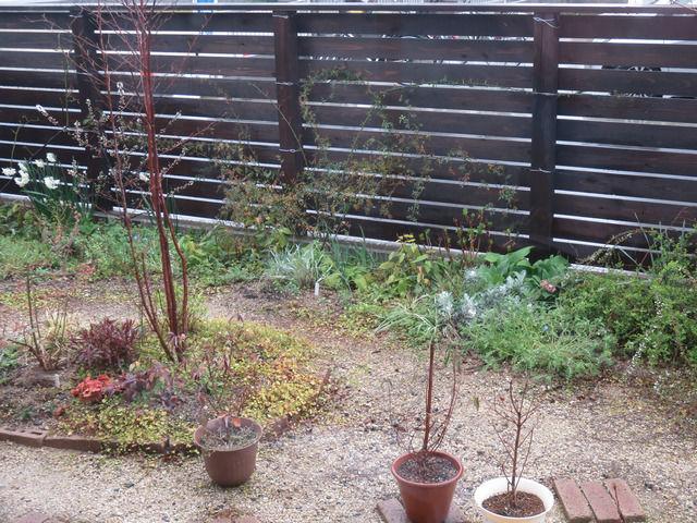 雨の庭の様子