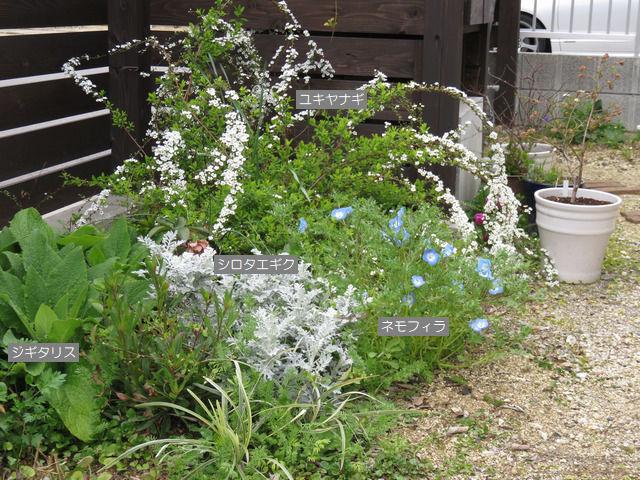 花が咲いているユキヤナギの一角