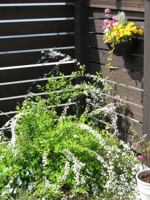 庭の様子 ユキヤナギとハンギングの寄せ植え