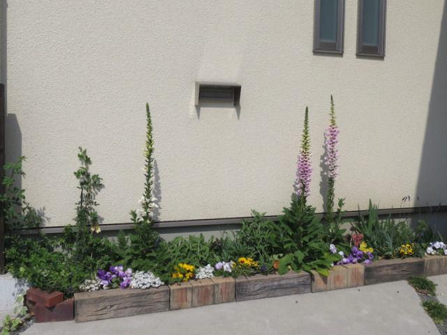 ジギタリスが3本咲いている花壇