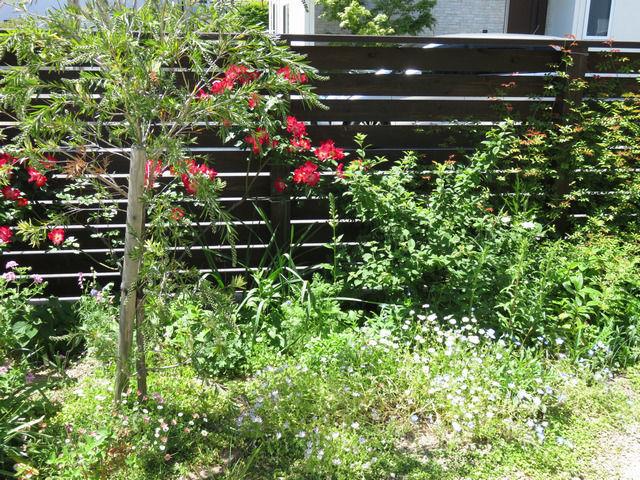 カクテルが咲いている庭の様子