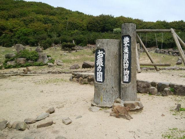 銚子渓自然動物園 お猿の国の園内