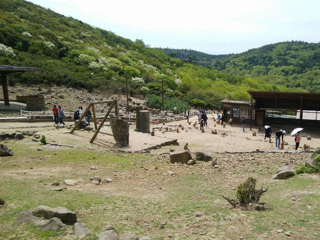 銚子渓自然動物園 お猿の国の全景