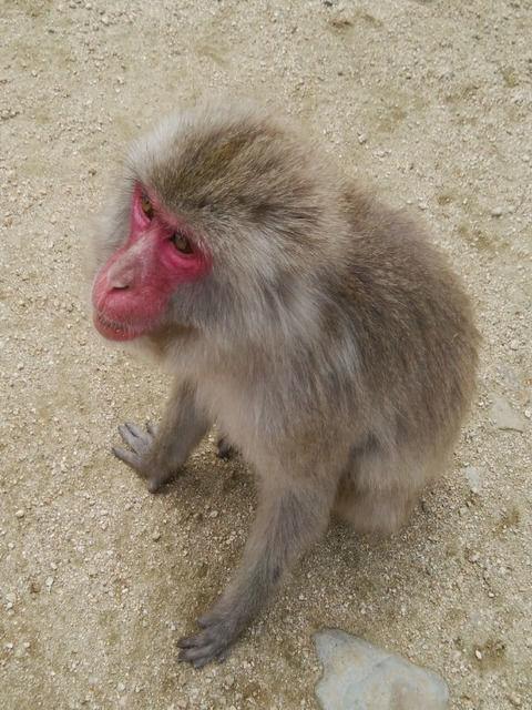 道端に居る猿