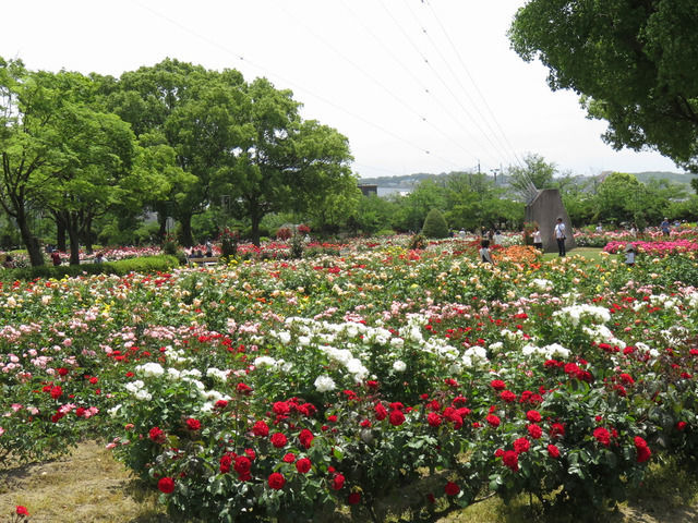 RSKバラ園の園内の様子