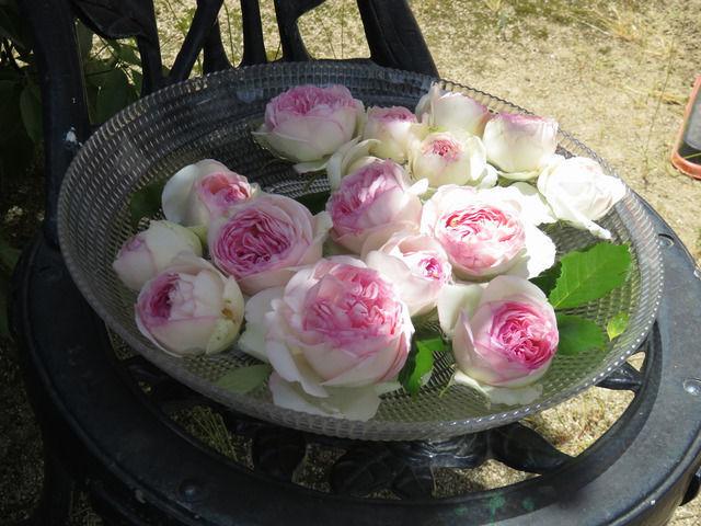 RSKバラ園の園内のバラ