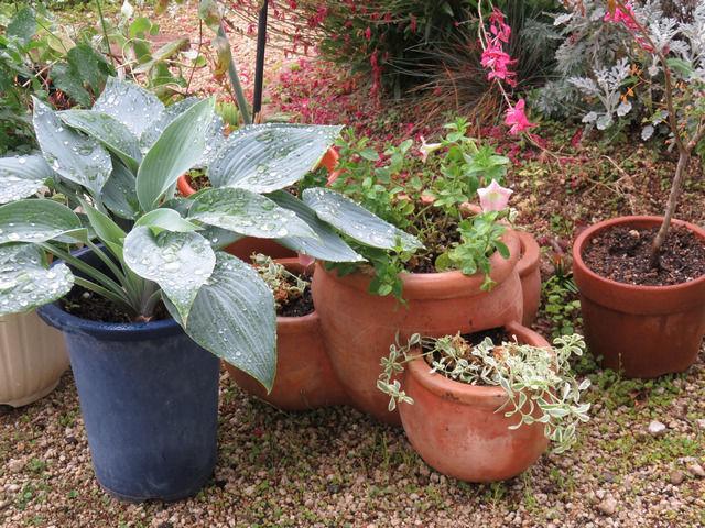 庭に置いている植木鉢や寄せ植えの写真