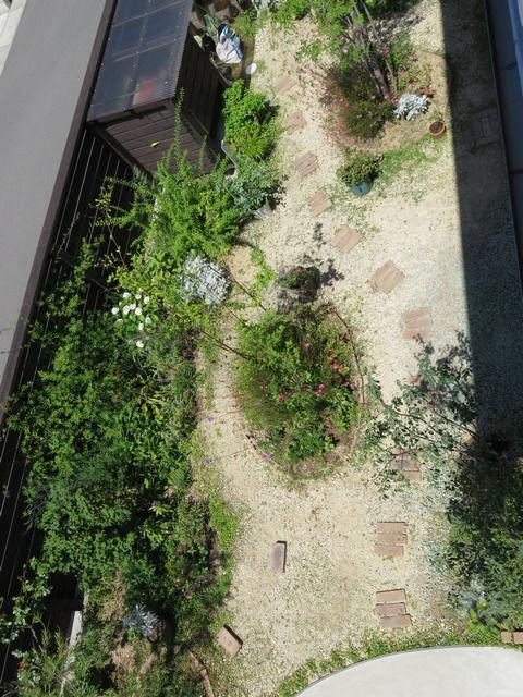 2019年6月の庭の画像