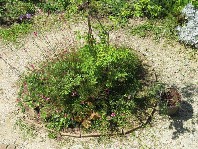 2019年6月の庭 エゴノキの植栽