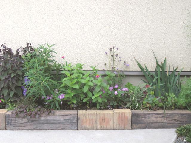 バーベナ・メテオールシャワーを植えた花壇