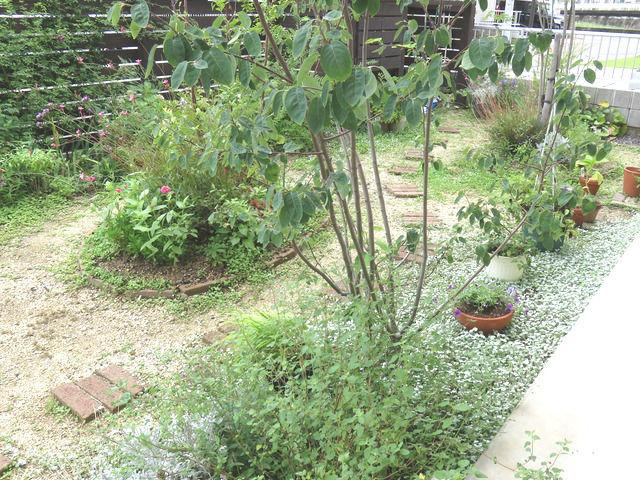 ジューンベリーの植栽