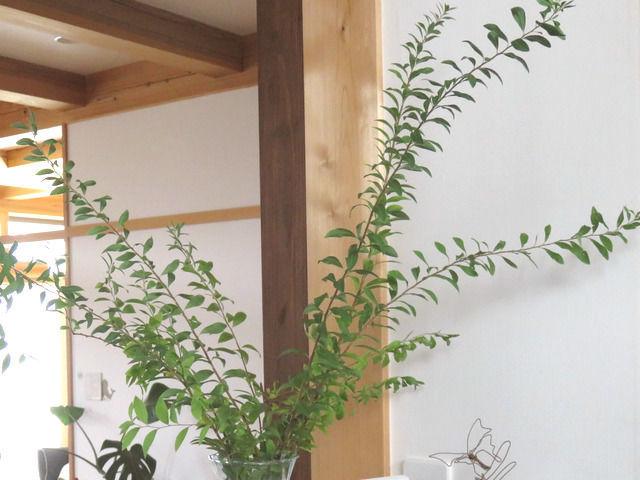 キッチンカウンターの上に飾ったユキヤナギの剪定枝