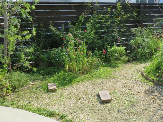 真夏の午後三時の庭の様子