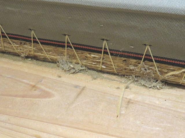畳の隙間のゴミやシバンムシの巣らしきもの