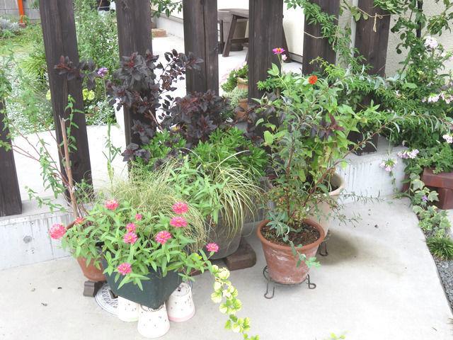 鉢植えをあつめた門柱のあたり