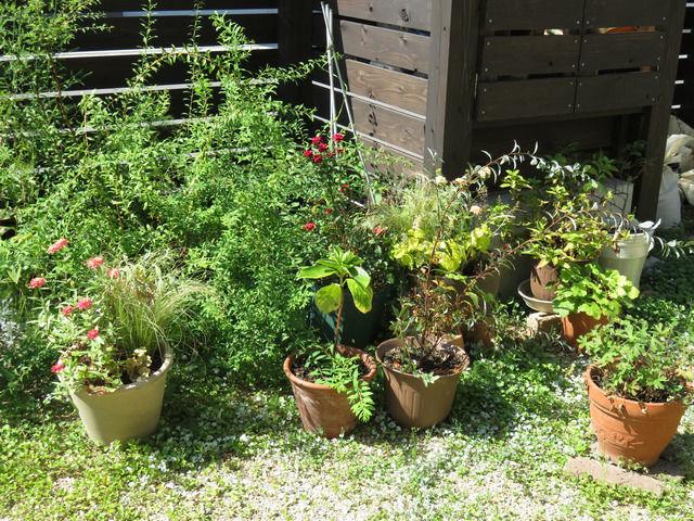 植木鉢が並べられた様子
