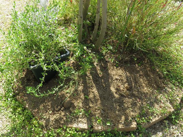 掘り返した木の足元