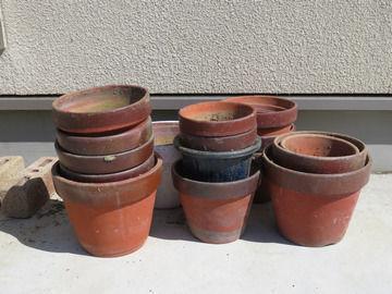 頂き物の植木鉢