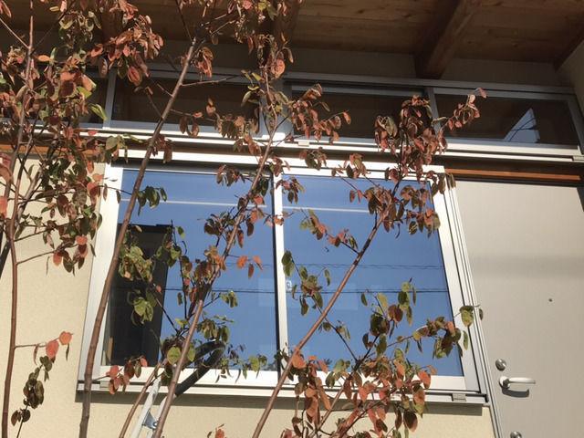 掃除が終わった窓ガラス