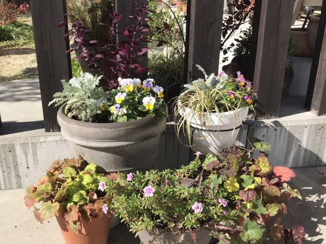 秋らしい寄せ植えと寄せ鉢の玄関