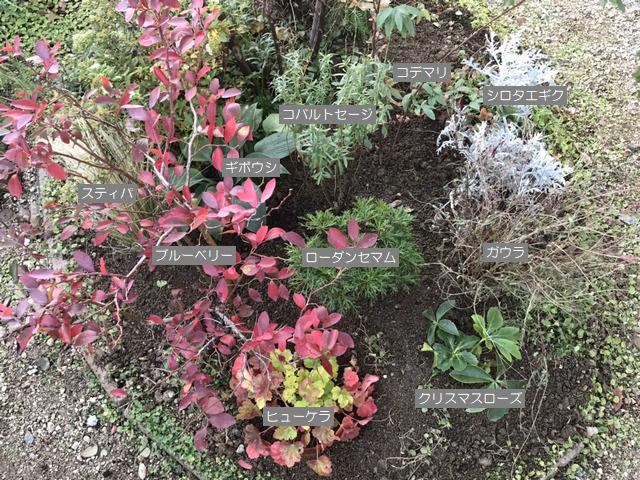 土壌改良をした場所に植えた植栽説明