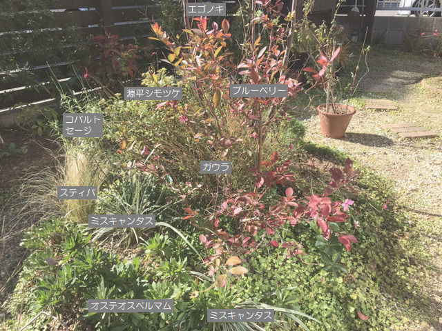 土壌改良をする前の植栽