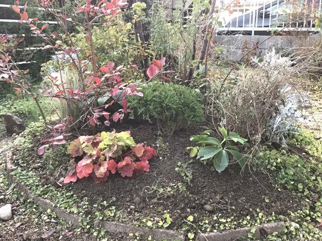 土壌改良をしたエゴノキの足元の植栽
